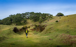 Woman walking on hiking path of Fanal plateau at Madeira island. royalty free stock photography