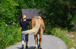 Woman walking with horse Stock Photos