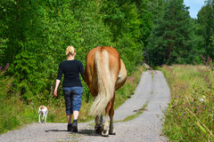 Woman walking with horse and dog. On country road Royalty Free Stock Photos