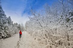 Free Woman Walking In The Trail In A Beautiful Day Of Winter Stock Photos - 180255133
