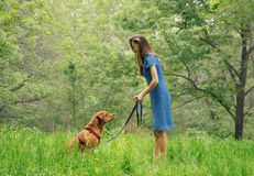Woman walking with labrador dog in summer park Royalty Free Stock Image
