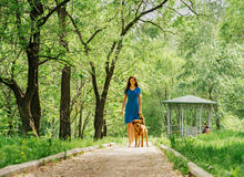 Woman walking with labrador dog in summer Royalty Free Stock Image
