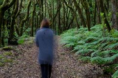 Woman walking through of a laurel forest. Garajonay National Park. La Gomera. Canary Islands. Spain royalty free stock images