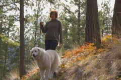 Woman walking Maremma dog in the trees Stock Photos