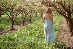 Woman walking in a orchard Stock Images