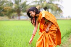 Woman walking in the paddy field Stock Photography