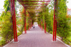Woman walking in the Park in Panama City Royalty Free Stock Image