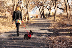 Woman Walking Scottish Terrier Dog. Attractive blond woman taking her Scottish Terrier dog on walk Royalty Free Stock Images