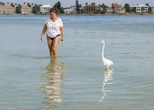 Woman walking in shallow surf with a Great Egret. royalty free stock photography