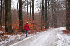 Woman walking in the snow in a forest Stock Image