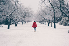 Woman walking in the snow shower. Beautiful contrast of the woman walking with a red coat on a moody day as the snow falls Stock Image