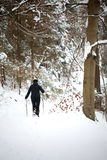 Woman walking in the snowy woods Royalty Free Stock Images