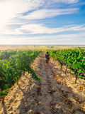 Woman walking in spanish vineyard. Stock Photo