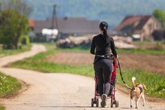 Sunny day in countryside. Mother with Child and Beagle dog walking away royalty free stock images
