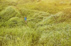 Woman walking in summer, tilt-shift effect. Explorer young woman walking on footpath among summer meadows, image with tilt-shift effect stock image