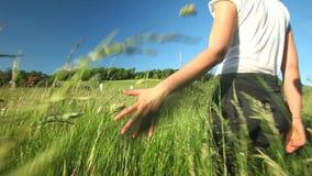 Woman walking touching long grass in field in summer on blue sky stock footage