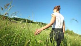 Woman walking touching long grass in field in summer on blue sky stock video footage