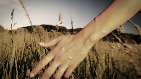 Woman walking touching long grass in field in summer - sepia style grading in slow motion stock footage