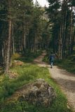 Woman walking on a trail in a pine woodland royalty free stock image