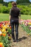 Woman walking through a tulip field Stock Photos