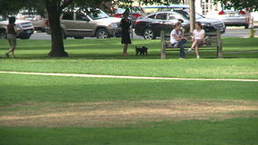 Woman walking two dogs through the park with people sitting on park bench stock footage