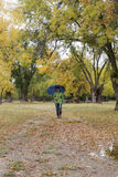 Woman walking with an umbrella in a park with yellow leaves falling from trees. In a city Stock Photo