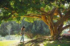 Woman walking under old tree in summer Stock Photos