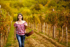 Woman walking  in vine rows Royalty Free Stock Images