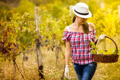 Woman  walking in vineyard Stock Photography