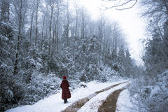 Woman Walking in Winter Forest Stock Image