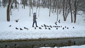 Woman walking in winter park among pigeons sitting on snow