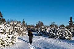 Woman walking in a winterland Royalty Free Stock Image