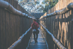 Woman walking in wooden narrow walkway. Protection for tourists in nature and wildlife reserve in South Africa. Concept of adventu Royalty Free Stock Photo