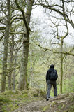 Woman walking through woodland Stock Images