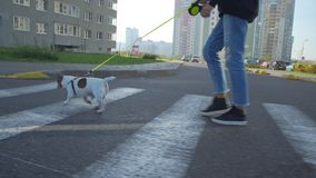 Woman walks along crosswalk leading dog with leash closeup