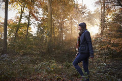 Woman Walks In Autumn Forest With Sun Shining Through Trees Royalty Free Stock Images