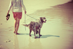 Woman walks the dog at the beach Stock Images