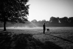 Woman walks with a dog in a park with another dogs on the backdrop. Royalty Free Stock Image