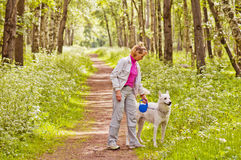 The woman walks with a dog in wood Stock Image