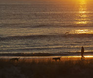 Woman Walks Dogs By the Sea At Sunrise Royalty Free Stock Photography