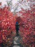 Woman walks in fall stock photography