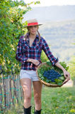 Woman walks with the harvest of grapes. Smiling woman walks with the harvest of grapes from the vineyard Stock Image