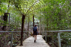 Woman walks on a path in the rainforest of Jamison Valley Blue M Royalty Free Stock Photo