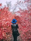 Woman walks in red trees royalty free stock photography