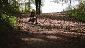 Woman walks with two dogs in the woods video with sound stock video footage