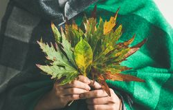 Woman in warm scarf holding Autumn leaves Royalty Free Stock Image