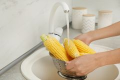 Woman washing corn ears in kitchen sink. Focus on hands royalty free stock photos