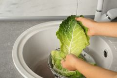 Woman washing leaf of savoy cabbage under tap water in kitchen sink. Closeup royalty free stock image