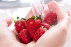 Woman Washing Strawberries Royalty Free Stock Images