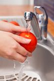 Woman washing tomato in running water under tap Royalty Free Stock Photography
